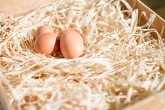Eieren op stro Royalty-vrije Stock Afbeelding