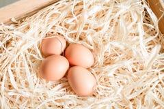 Eieren op stro Royalty-vrije Stock Foto's