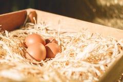 Eieren op stro Stock Afbeelding