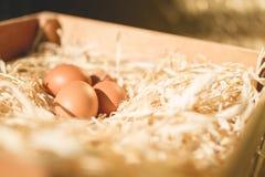 Eieren op stro Royalty-vrije Stock Fotografie
