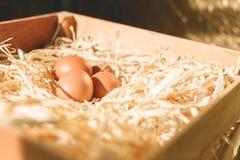 Eieren op stro Royalty-vrije Stock Afbeeldingen