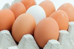 Eieren in paneel Royalty-vrije Stock Foto's