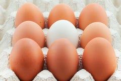 Eieren in paneel Royalty-vrije Stock Foto