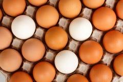 Eieren in rooster Stock Foto's