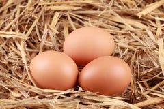 Eieren in stro Stock Afbeelding