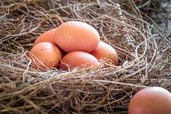 Eieren in stro/Verse landbouwers` s eieren Royalty-vrije Stock Fotografie