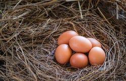 Eieren in stro/Verse landbouwers` s eieren Royalty-vrije Stock Afbeelding