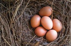 Eieren in stro/Verse landbouwers` s eieren Stock Foto's