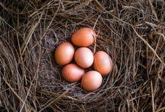 Eieren in stro/Verse landbouwers` s eieren Stock Fotografie