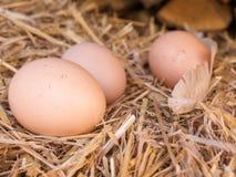 Eieren van de close-up de bruine kip op een bed van stro Stock Afbeeldingen