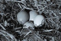 Eieren van de moederkip Stock Foto's