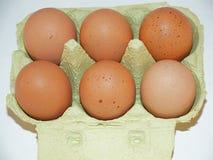 Eieren van een Kip Stock Afbeelding