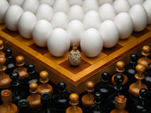 Eieren van een kip en een kwartel. Stock Foto's
