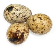 Eieren van kwartels isoleerden op wit de achtergrond Stock Fotografie