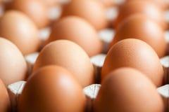 Eieren in verpakking Royalty-vrije Stock Foto's