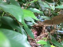 Eieren in Vogel` s Nest in een boom Royalty-vrije Stock Afbeeldingen