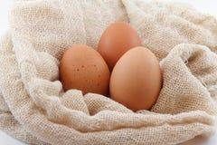 Eierenlandbouwbedrijf Royalty-vrije Stock Foto's