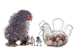 Eierenmand, kip en kuiken stock foto's