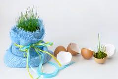Eierenshell en jong gras met exemplaarruimte Stock Afbeelding