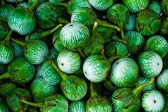 Eierplant Stock Foto