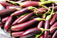 Eierplant Stock Fotografie