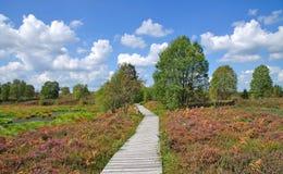 eifel υψηλό πάρκο φύσης monschau venn στοκ φωτογραφία με δικαίωμα ελεύθερης χρήσης
