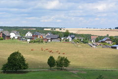 Eifel w Niemcy z krowami i domami Zdjęcie Stock