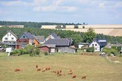 Eifel w Niemcy z krowami i domami Zdjęcia Royalty Free