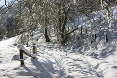 Eifel zimy krajobraz, Niemcy Obraz Royalty Free