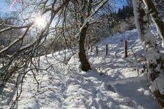 Eifel zimy krajobraz Przeciw światłu, Niemcy Obrazy Royalty Free