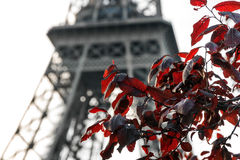 Eiffel red leafs Royalty Free Stock Image