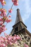 Eiffel torn i fjädertid, Paris, Frankrike Arkivfoto