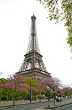 Eiffel Tower. With blossom trees in May Royalty Free Stock Photos