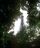 Eiffel Tower. Eiffel Tower and green trees. Paris, France Stock Photo