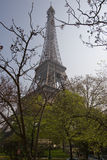 Eiffel Tower. Through the trees, Paris, France Stock Images