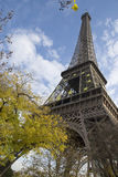 The Eiffel Tower. Autumn the Eiffel Tower and the ginkgo tree Stock Image