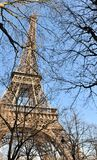 Eiffel Tower behind branches Stock Photos