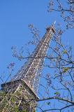 Eiffel Tower behind the tree with kidneys Stock Photo