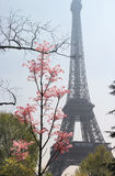 Eiffel tower in bloom and nice sunny day, Paris Stock Images