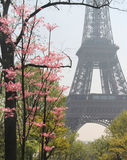 Eiffel tower in bloom, Paris, France Royalty Free Stock Photo