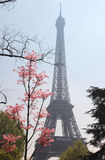 Eiffel tower in bloom, Paris, France Royalty Free Stock Photography