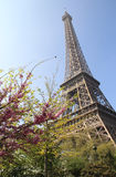 Eiffel tower in bloom, Paris, France Stock Images