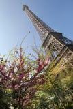 Eiffel tower in bloom, Paris, France Stock Photo