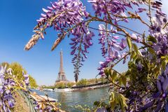 Eiffel Tower with boat during spring time in Paris, France. Famous Eiffel Tower with boat during spring time in Paris, France Stock Photo