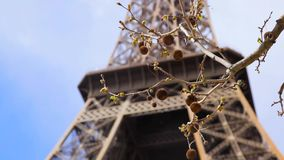 Eiffel tower with branch of chestnut tree stock video footage