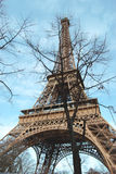 The Eiffel Tower in the branches of the tree. Royalty Free Stock Images