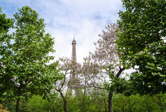 Eiffel Tower at Champ de Mars Garden in Paris Royalty Free Stock Photo