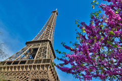 Eiffel Tower with cherries  in Paris France Stock Photography