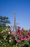 Eiffel tower and flowers Stock Photo