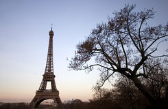 The Eiffel Tower in Paris.  Royalty Free Stock Image